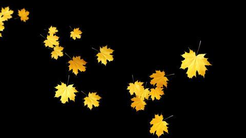 Autumn Leaves Falling 01 Animation