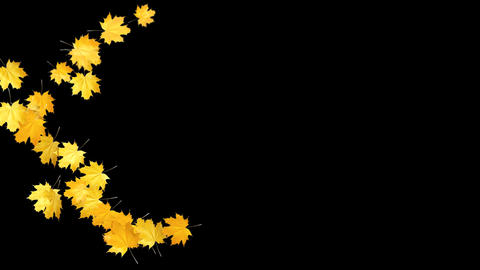 Autumn Leaves Falling 03 Animation