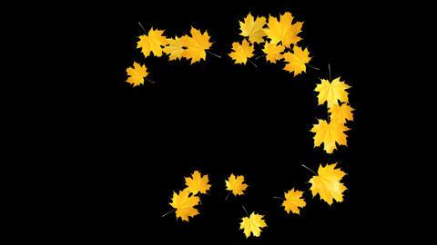 Autumn Leaves Falling 06 Animation