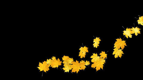 Autumn Leaves Falling 09 Animation