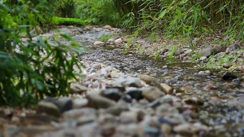 Tranquil scene with a creek stream in the woods Live Action