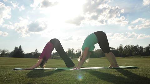 Elegant sporty ladies practicing yoga pose in park Live Action
