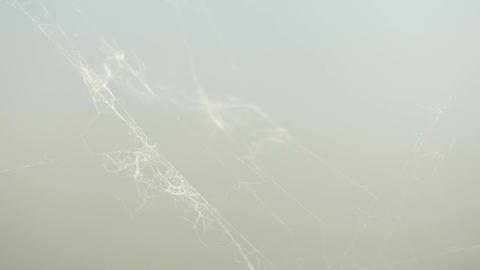 The rest of cobweb in really strong wind, extreme close view. A Spiders Web in m Footage
