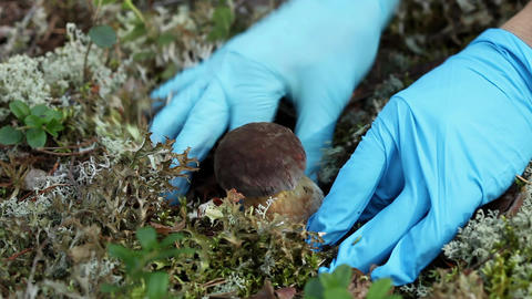 Picking bolete mushroom Stock Video Footage