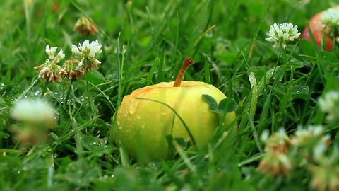 apple on grass Stock Video Footage