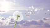 Dandelion, 3d animation against sky background Animation