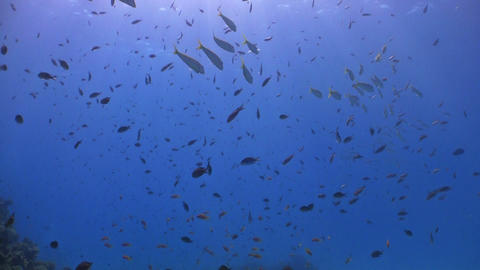Colored Fish on a background of blue water, Red Sea Stock Video Footage