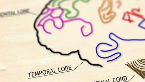 Human Brain v 2 2 Stock Video Footage