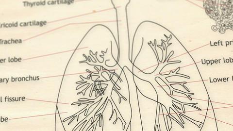 Human Lung v 2 2 Animation