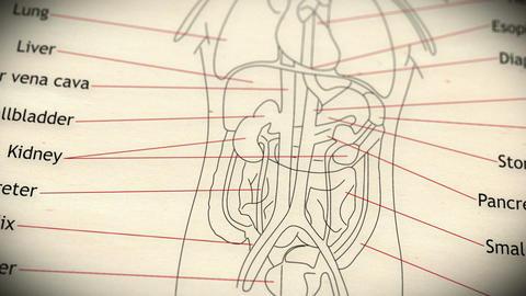 Human Organs v 2 1 Stock Video Footage
