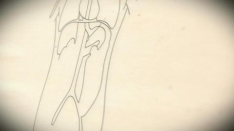 Human Organs v 2 3 Stock Video Footage