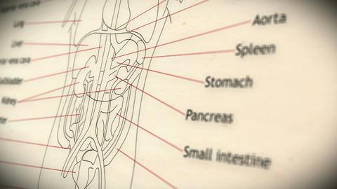 Human Organs v 2 3 Animation