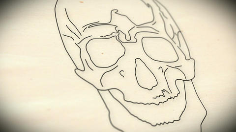 Human Skull v 2 1 Stock Video Footage