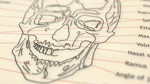 Human Skull v 2 3 Animation