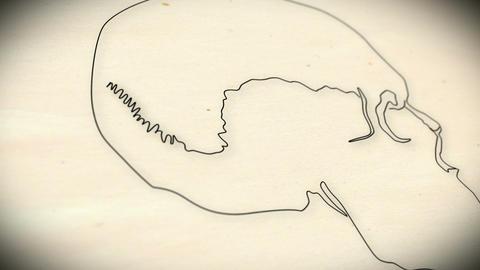 Human Skull v 2 5 Stock Video Footage