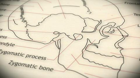 Human Skull v 2 7 Animation