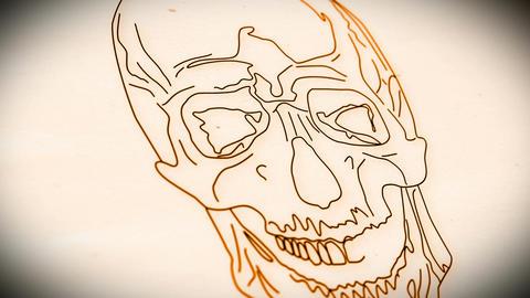 Human Skull v 2 9 clean Animation
