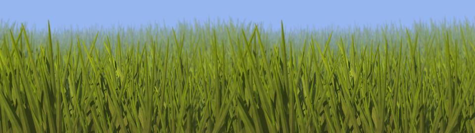 Grassy Field Stereo 3D Animation