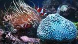 Marine aquarium Footage