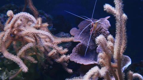 Marine Aquarium 0