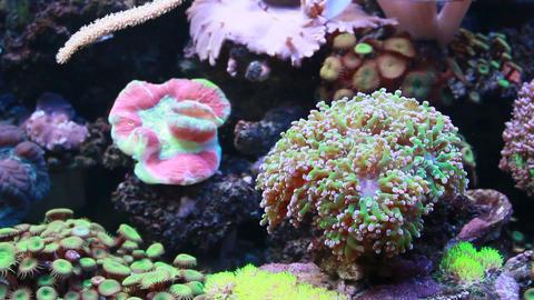 Marine aquarium Stock Video Footage