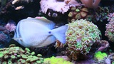 Marine Aquarium stock footage