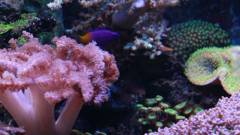 Marine aquarium Stock Video Footage