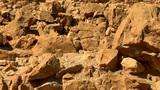 stones of Masada b Footage