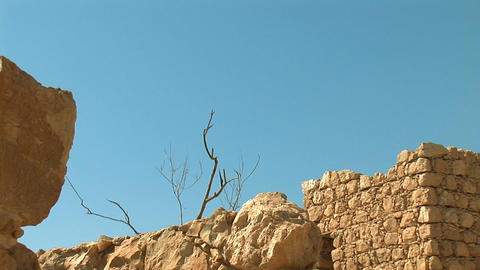 dead tree at the fortress of Masada c Stock Video Footage