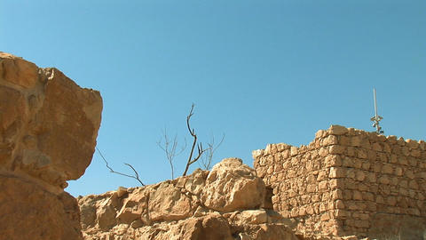 dead tree at the fortress of Masada c Footage