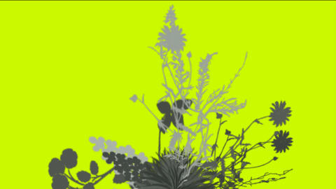 flower & plant growing Stock Video Footage
