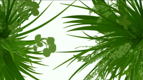 flower & plant growing silhouette Stock Video Footage