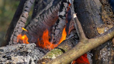 Campfire Closeup, 4K Footage