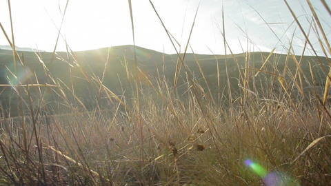The camera is moving in the dry grass at sunset in the mountains. glider Live Action