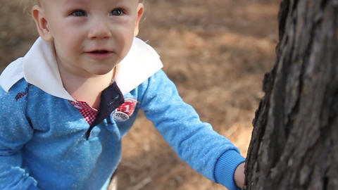 Little boy looks at a tree trunk Footage