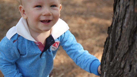 Little boy looks at a tree trunk Stock Video Footage