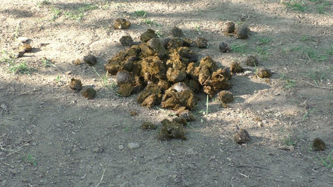 Pile of horse manure on a horse farm Footage