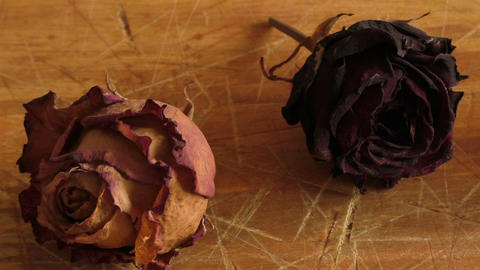 Dried rose flower on a wooden table, vintage style Live Action