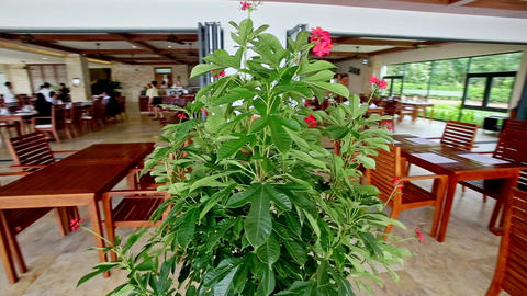 Closeup Large Pot Flower in Empty Restaurant in Hotel Footage