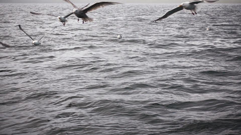 Seagulls Flying Over Dark Water Footage
