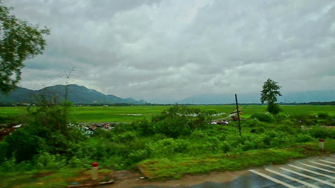 Rural Landscape Bulls Fields Trees Roads against Cloudy Sky Footage