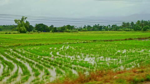 Rural Landscape Rice Fields Villages Roads against Cloudy Sky Footage