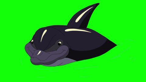 Dolphin in the Water Animation