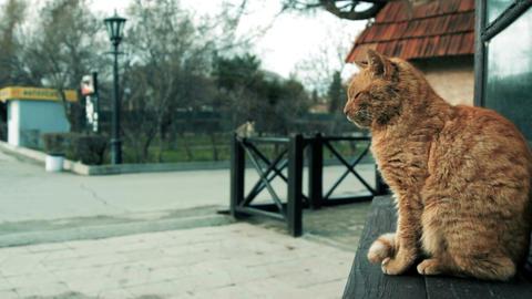 Cat sitting on the windowsill on the street Stock Video Footage