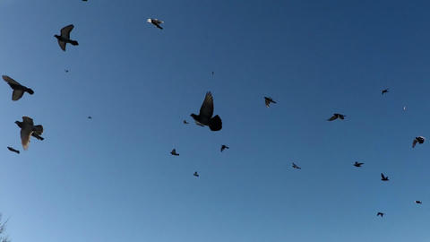 A flock of birds fly the sky. slow motion 120fps Footage