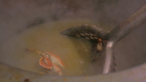 Crab boiling in a big pan Stock Video Footage