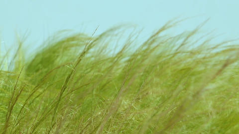 Feather grass steppe closeup Footage