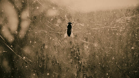 Gadfly on dirty window glass at scary haunted house, threat of catching disease Footage