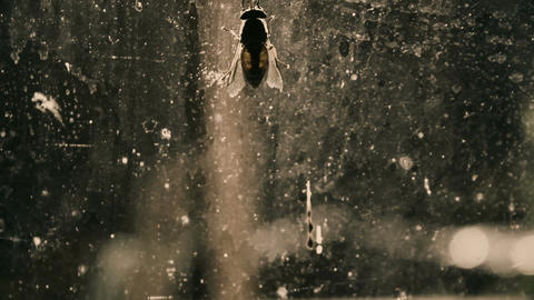 Fly on dirty window, insanitary place with infections, microbes and diseases Footage