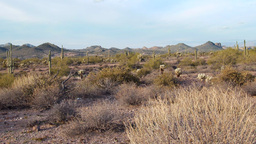 Pan of Superstition Mountains Desert in Arizona Footage
